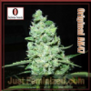 Serious Seeds AK47 Female 6 Cannabis Seeds